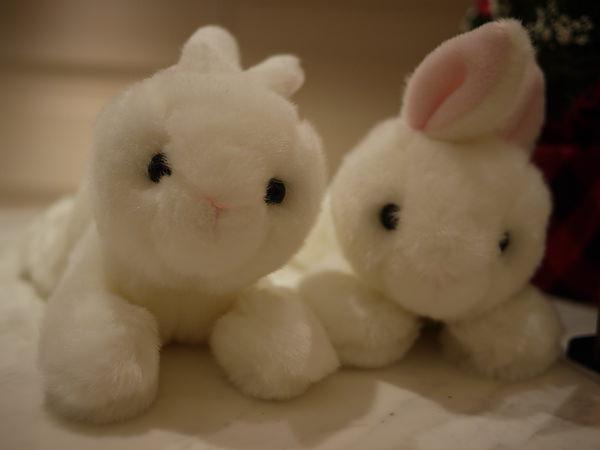 明年是兔年...所以有兔兔們